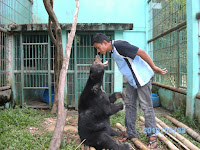 The companionship with sun bear