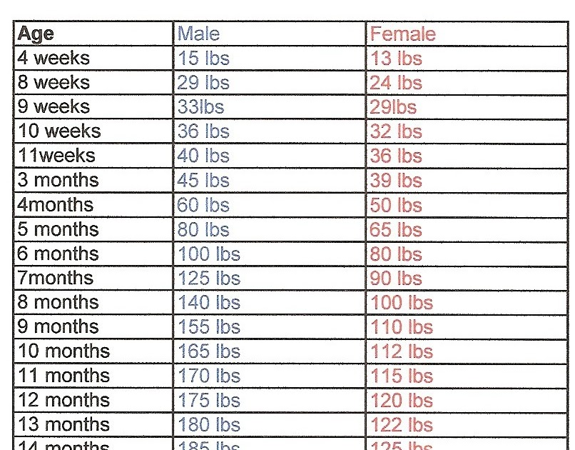 How Much Does A Pitbull Weigh At 3 Months