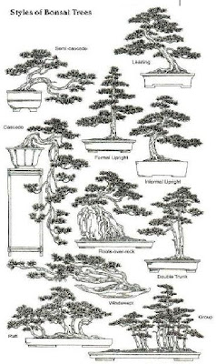 The Ancient Art of Bonsai: Styles Of Bonsai Trees