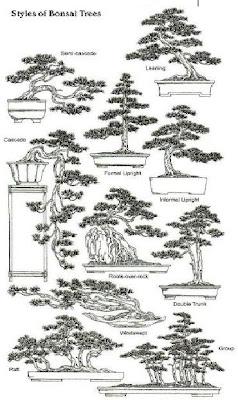 The Ancient Art of Bonsai: Styles Of Bonsai Trees