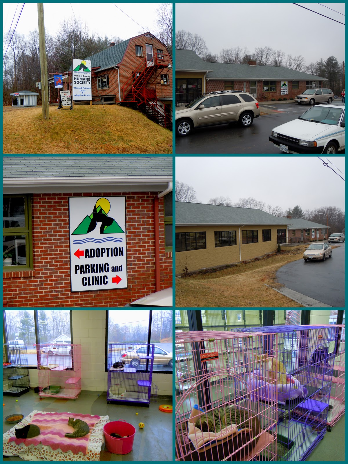 The World According To Lexi Franklin County Humane Society Planned Pethood Clinic And