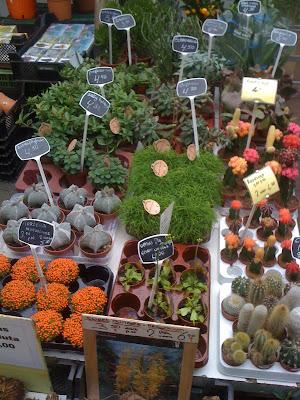 Amsterdam Flower Market, flowers, plants, succulents, cacti, cactus