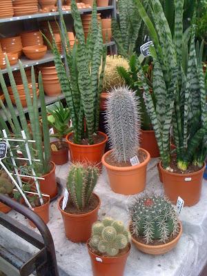 Amsterdam Flower Market, flowers, Amsterdam, flower market, plants, nature, succulents, cacti, garden, gardening, travel, terrarium, Dutch