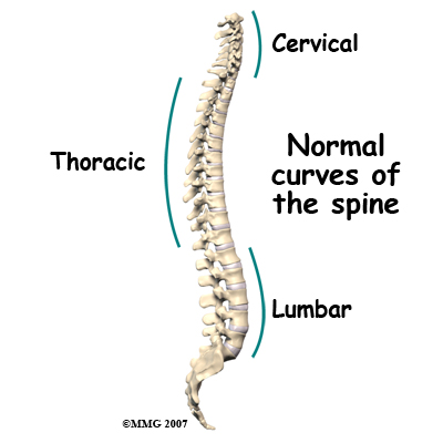 my troubled bones: :The Anatomy of Scoliosis: