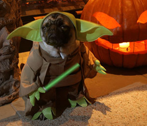 Dogs Wearing Costumes