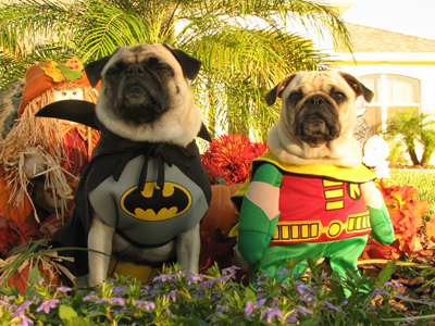 Dogs Wearing Costumes - Cute Pictures of Dogs in Costumes ...