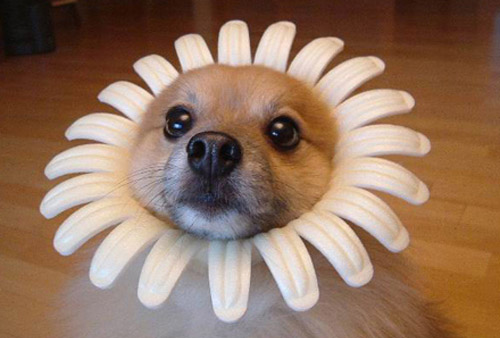Very cute dog in flower costume & Dogs Wearing Costumes - Cute Pictures of Dogs in Costumes: Very cute ...