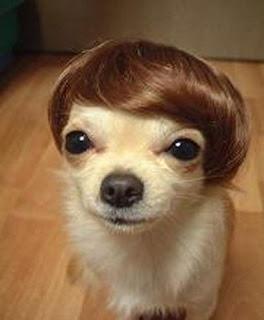 https://i2.wp.com/4.bp.blogspot.com/_NPNpFigf6aw/ScXj_CHo42I/AAAAAAAAAEw/DpQftGyjndQ/s320/funny-pictures-of-puppies.jpg