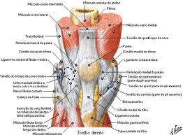 Mais para dor no palmilhas joelho votadas