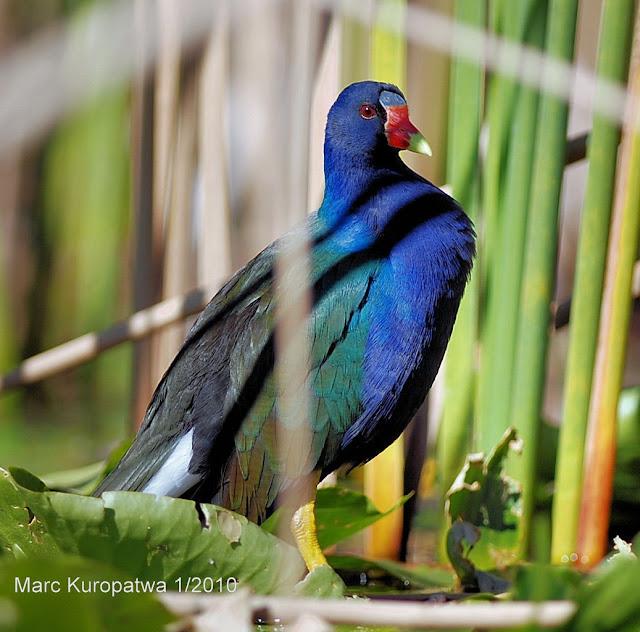 #BirdingWithKenny