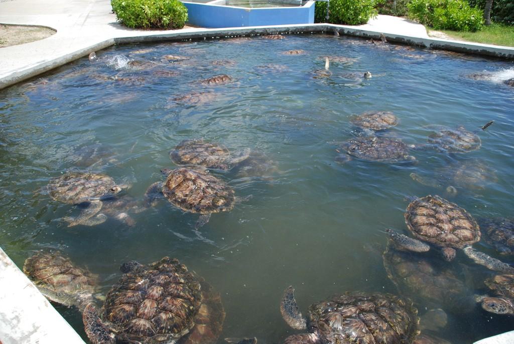 Burdin 39 s family in usa turtle farm - Bassin tortue floride strasbourg ...