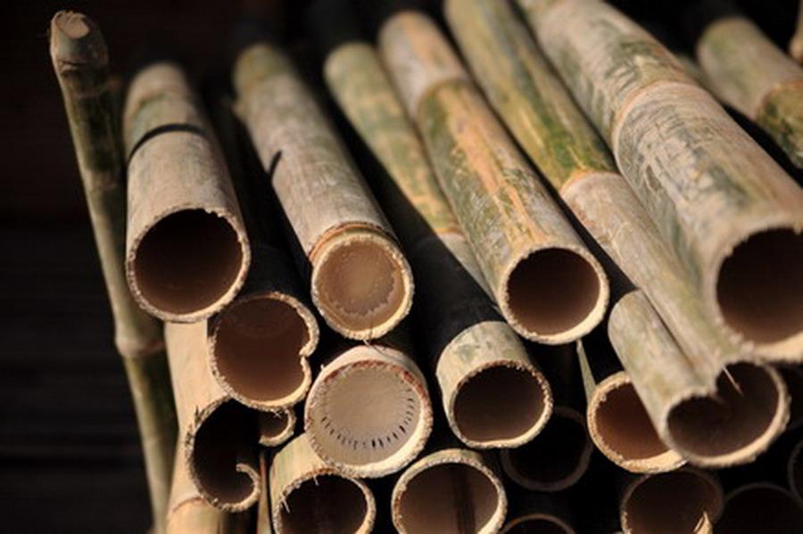 Tulay Na Kawayan Bamboo Surveys