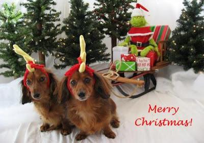 Dog Christmas Card Photo.Dog Christmas Cards Everything So Beautiful