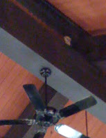 Owl in the rafters of the Mill Valley Public Library