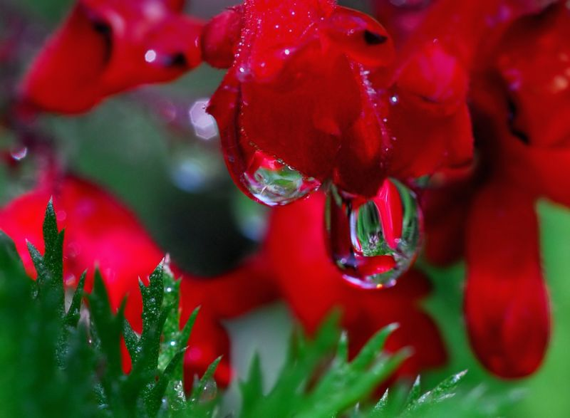 Wallpapers Rainy Days Pictures Wonderful Nature After Rainy Lovely Riny Days Beautiful Images From After Raining Amazing Rain Drop Images Chill Images