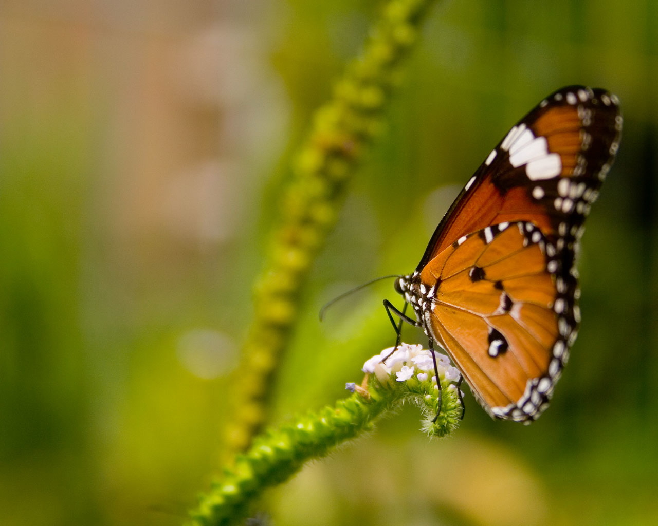 Butterfly Gallery: Amazing Natural Pictures,Seeneries,Wallpapers, Sceneries