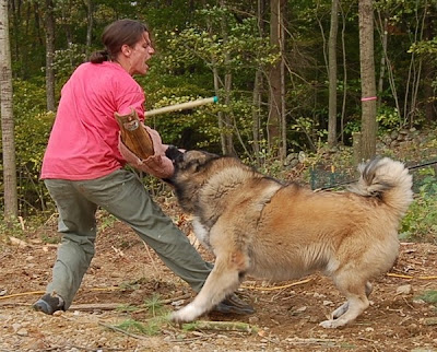 Protection Trained Dogs Uk