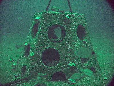 Artificial Reef cone