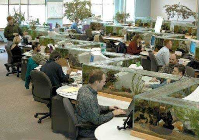 Fish tank cubicles