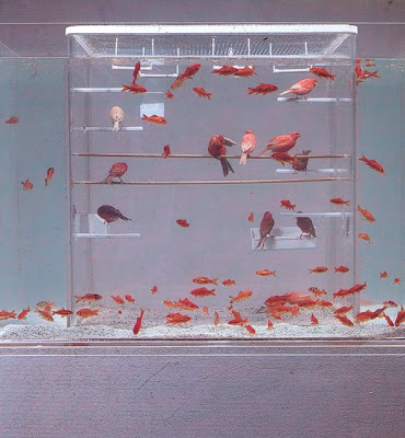 Aquariums That Are Definitely Worth A Second Glance