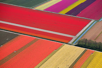 Spectacular Display Of Color - Tulip Fields (11) 7