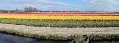 Spectacular Display Of Color - Tulip Fields (11) 5