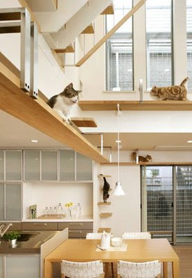 Cat-Friendly House Design (7) 1