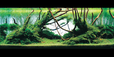 The 2008 International Aquatic Plant Layout Contest (3) 2