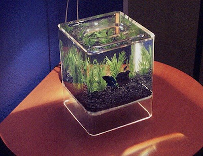 Cool Aquariums and Unusual Fish Tanks Designs (50) 26