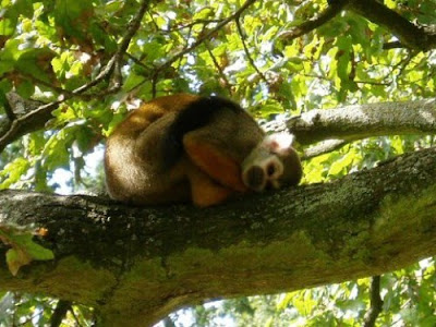 Cute Sleeping Animals (30) 6