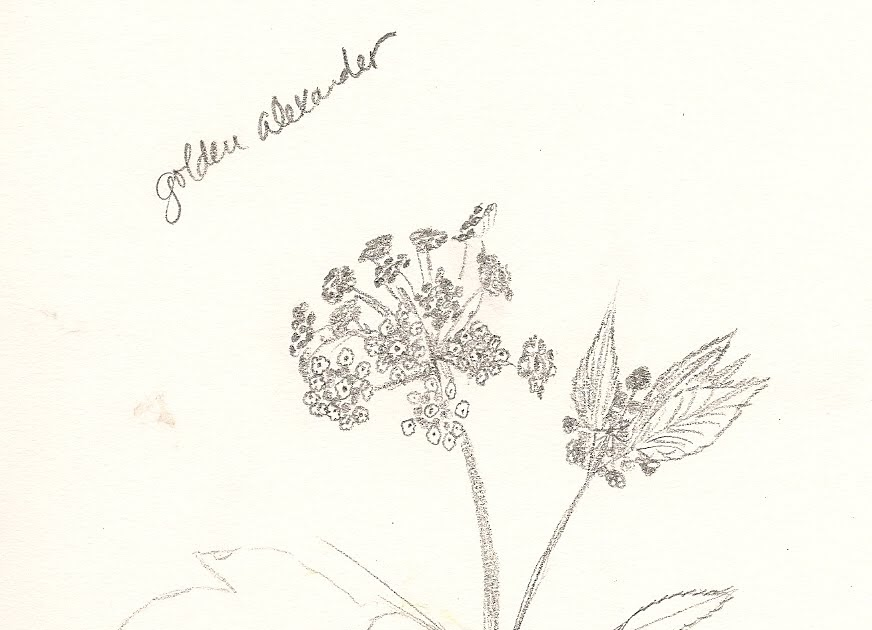 Nature Nerd... A Phenology Blog: Sketches Here and There