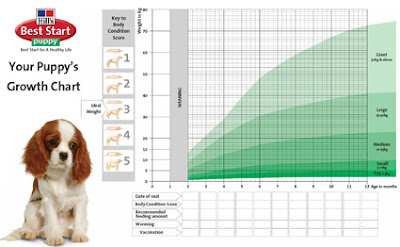 dog weight chart golden retriever