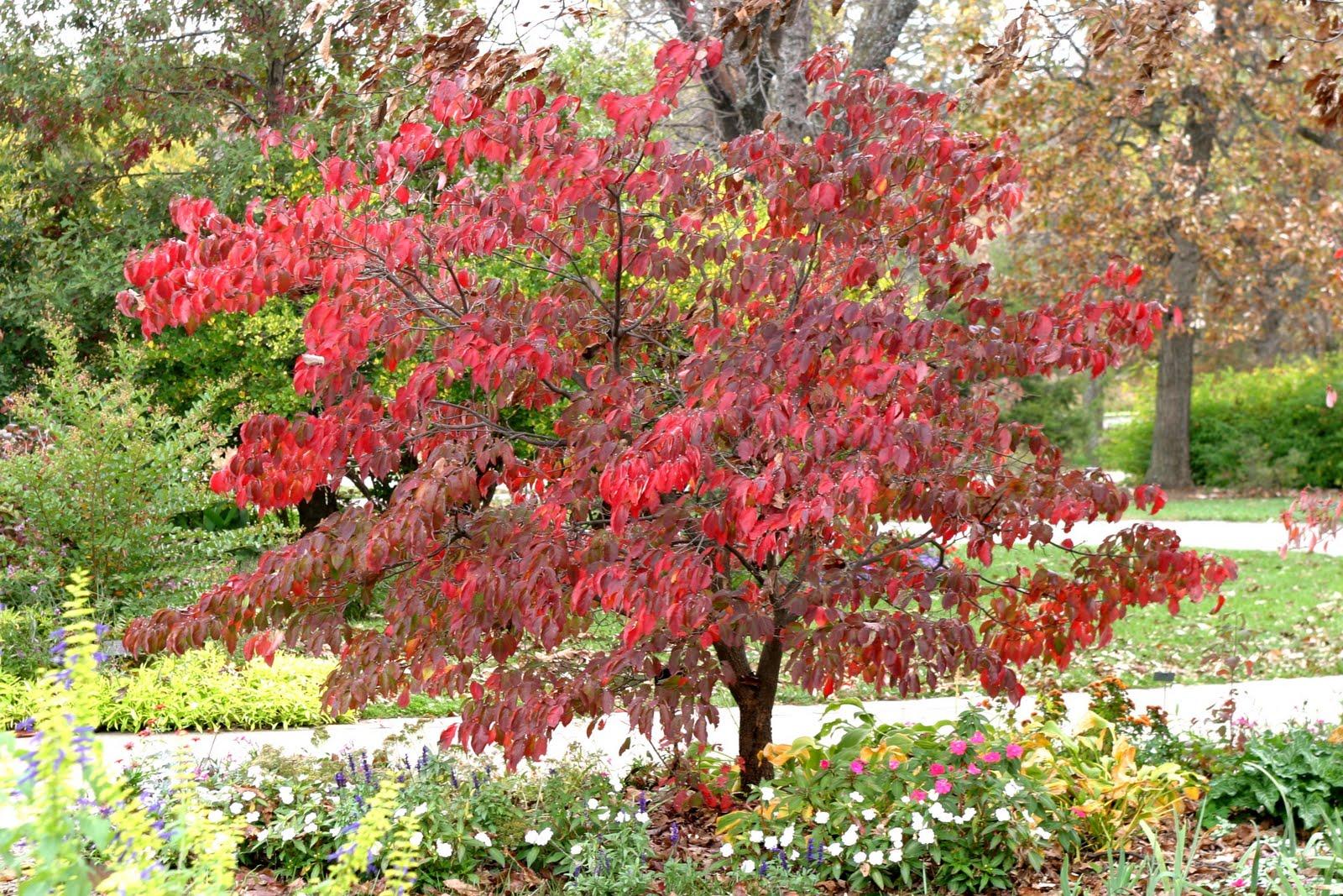 Powell Gardens Blog Reflections Of A Grand Growing Season