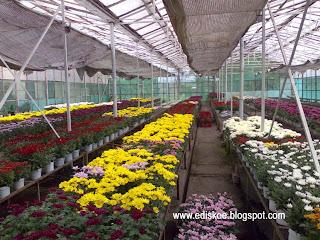 Greenhouse Dan Hidroponik Komersial Indonesia Types Of
