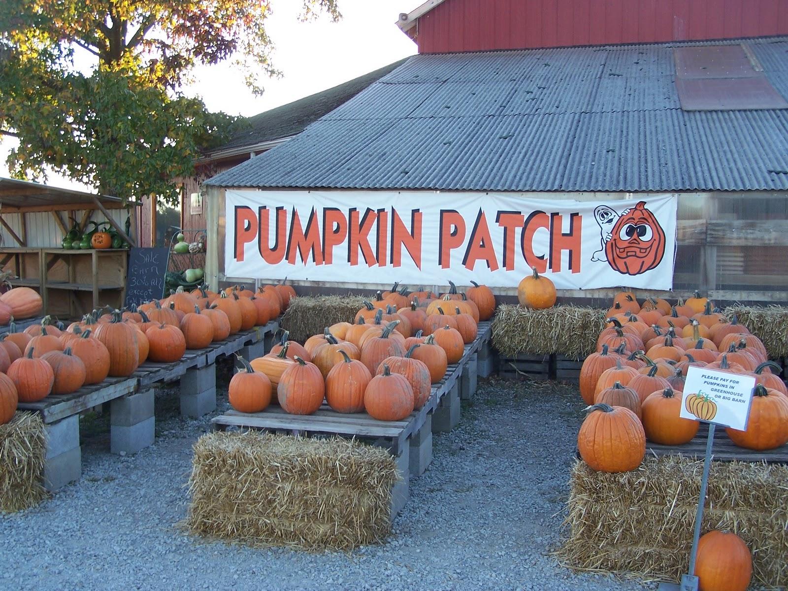 pumpkin patch ligonier in