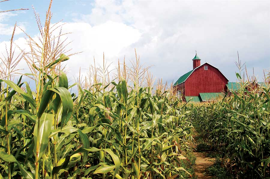 Unhydrogenated: How Corn Became King: Part 1