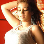 North Indian Actress Ayesha Takia Wallpapers,profile,biography,filmography