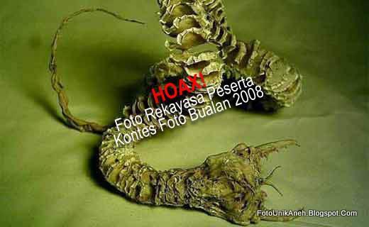 Mahluk Cacing Misterius Pembawa Maut di Gurun Gobi - munsypedia.blogspot.com