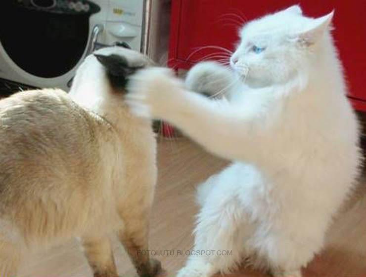 Kumpulan Foto Lucu: Kucing Lagi Tinju