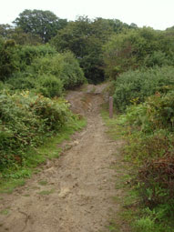Hadleigh Country Park