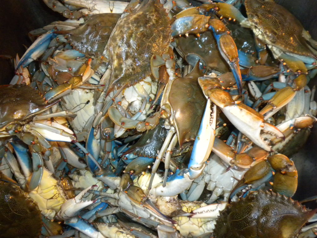 Life is Delicious: Steamed Blue Crabs