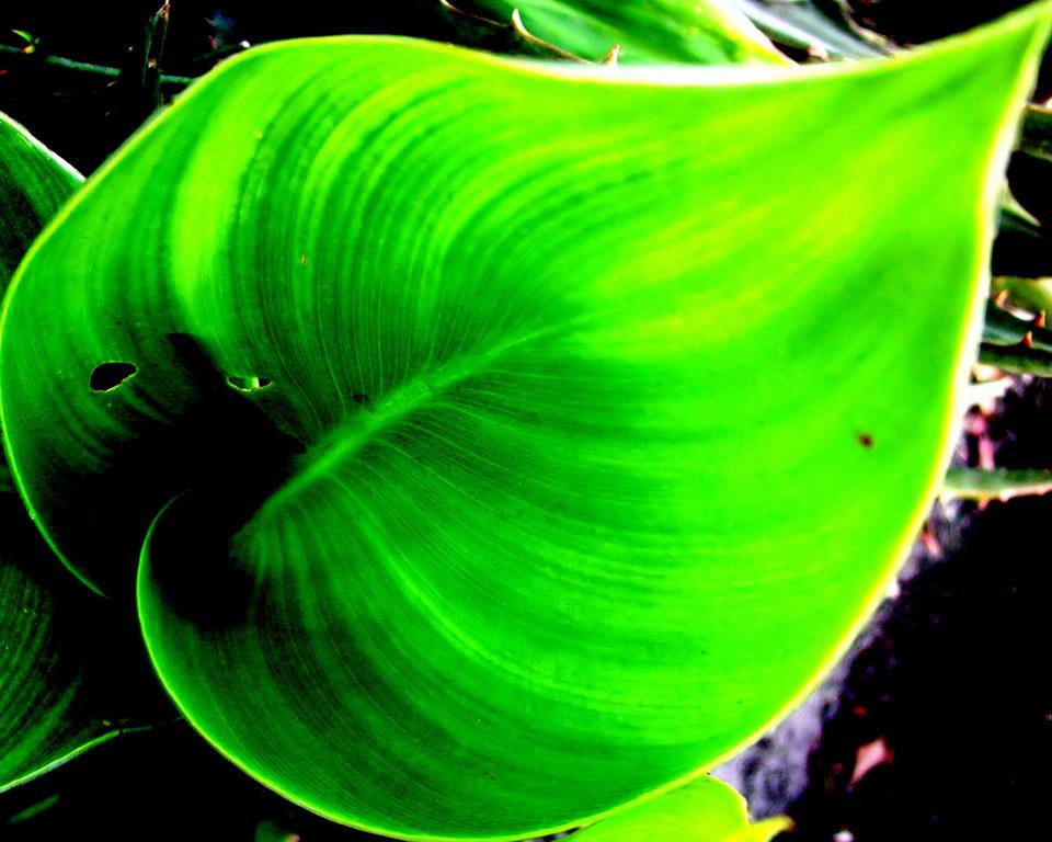 hogyan készítsünk zöld turmixokat a fogyáshoz remix
