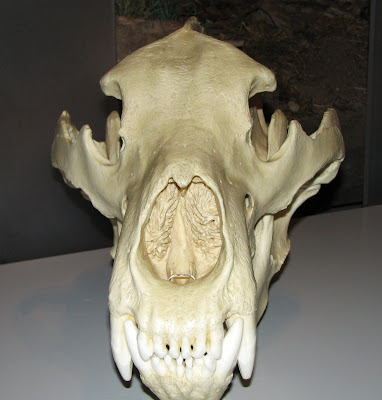 Dire Wolf Skull Front