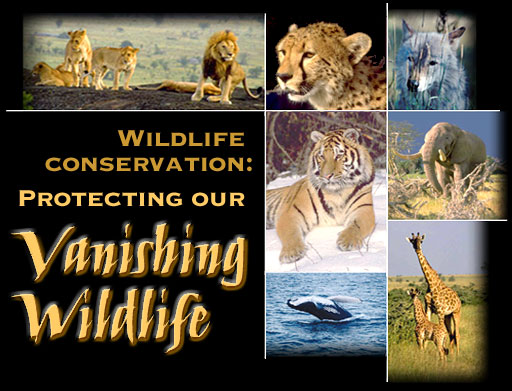 Essay on wildlife protection in india