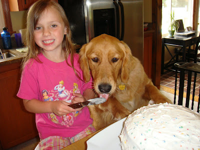 Golden Retriever trying to help frost a cake