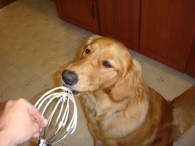 golden retriever licking whisk