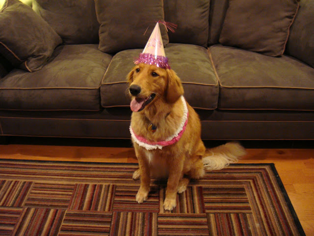 golden retriever dog's first birthday