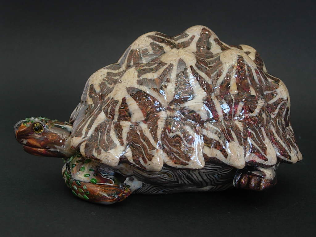 tartaruga stellata indiana