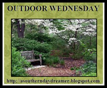 Visit Susan for Outdoor Wednesdays