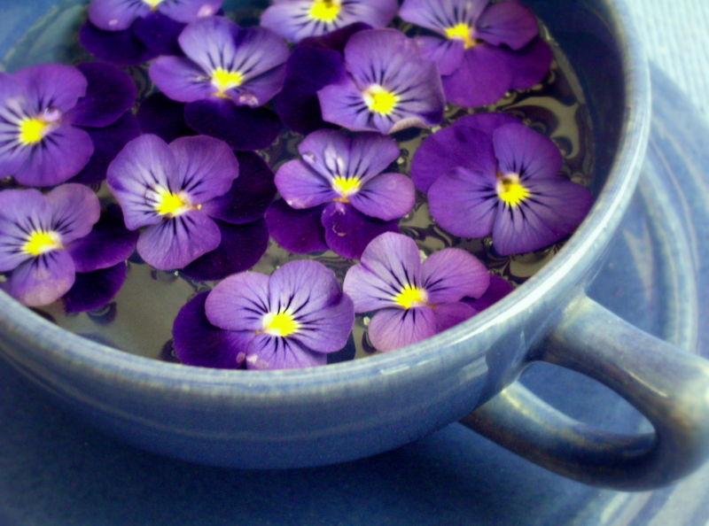 A PIECE OF EUROPEAN TREASURE   The legend of Violet   the flower  A PIECE OF EUROPEAN TREASURE   The legend of Violet   the flower
